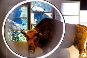 Mit der Entdeckerlinse durchs Naturkundemuseum